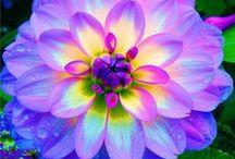 Pretty flowers make me smile :)
