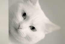 Cats  / by ♥ Rolande B. ♥