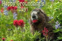Groundhog Day / It's Groundhog Day on February 2nd! If Punxsutawney Phil, sees his shadow, we're stuck with six more weeks of winter. So watch out!