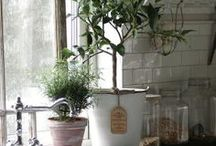 Apartment gardening / by Lex Palmer Bull