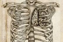 Anatomy / Human Body