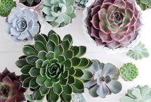 Greenhouse / Plants