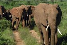 Africa / Looking to plan a safari adventure? You've found the experts.