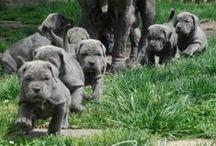 Cute Pets! / by Chelsea Johnson