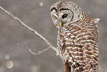 Owl Love / My favorite birds and my former school's mascot too! / by Our Fairfield Home & Garden