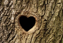 Hearts   / Hearts occurring in nature, in man-made objects and by accident.