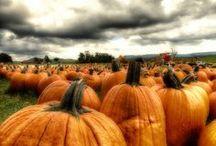 Autumn~Mabon~Samhain~Thanksgiving / Autumn, Mabon, Samhain, Thanksgiving / by Heather Cox