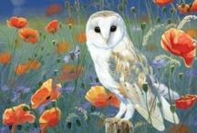 Owls!  / by Tabby Powell