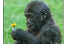 Life list - Wildflowers etc.