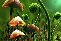 Fairy Garden Ideas / by Niki Emel