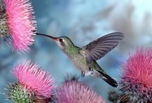 ~ BIRD, BIRDS, BIRDS, BEAUTIFUL BIRDS / I love humming birds. They are my favorite birds. I am a lover of vibrant colored birds as well. There are so many beautiful birds in this world. How lucky we are to get to see God's creatures. / by Denise Cottom