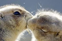 Animal Affection / There's something about animals kissing that makes me proud to be one.