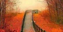 Fall Foliage / The colors of Autumn.