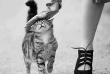 Catty Women... / kitty love... / by Mary Beth Burrell