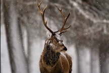 Winter Wonderland / by Kyle Callahan