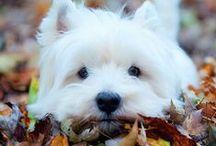 Joys of Fall / by Kyle Callahan