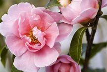Garden ~ Fleurs / by Cathy