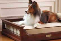 Cute pets / Treat your pet no less and let them flaunt as they laze in their stylish homes.