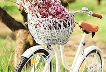 Beautiful Bikes / by Cathy