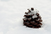 Pine cone / by Lisa Hopkins