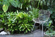 Garden and outdoor living / Gardening and outdoor living / by Anuska McFarlane Dandlau