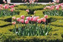 some bloomy gardens