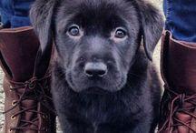 Puppies & Cuties / by Nikki Fornataro