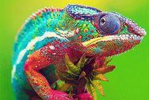 Kleuren / Colors / Waarom kies je in een design soms voor bepaalde kleuren? En welk gevoel kan dit bij je oproepen?
