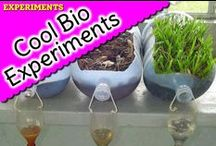 Cool Biology Experiments