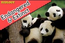 Endangered & Extinct