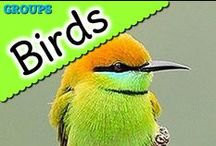 Birds / A collection of resources all about birds.