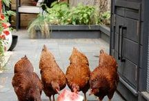 CHIC CHICKEN COOP INSPIRATION - backyard chickens, chicken coops, how to raise chickens / inspiration for my backyard chickens in Seattle. looking for stylish but functional chicken coops, how to raise chickens, tips for owning chickens, fancy chickens and more.