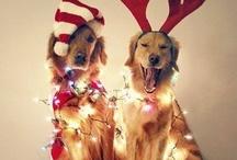 Festive!
