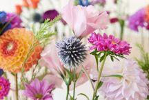 FLOWER/PLANTS