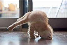 animal yogis / www.yyoga.ca / by YYoga