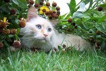 Cats / Cat humor, My cats, Cats, cats, cats!