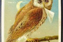 BIRDS-and-EGGS