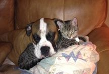 Precious Loves ~ Pets,Kids and anything cute! / by Sheila States