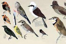 Birds in Nature / garden, outdoor living, birding, wildlife, art, photography, décor / by terrain