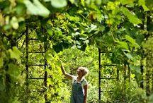 Gardeners / by terrain