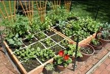 Growing, Gardening and Green / by itweetArt / Alissa Fereday
