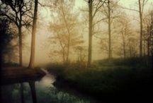 IPHONEOGRAPHY / by Jeanne Stregles