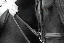 Horses & Barns / Horses fill my heart with love