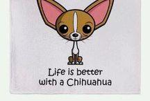 I ❤️Chihuahuas / I love Chihuahua pups!