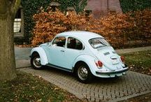 Beetle Dream