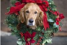 CHRISTMAS!!! / by Jaclyn Hubler
