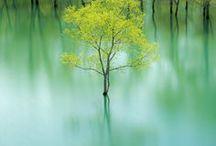 nature pix