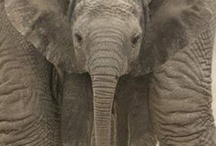 Animals / by Sarah Rupert
