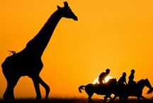 Africa / Discover travel tips and ideas for Africa