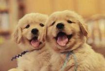#puppy / by Courtney Baylie